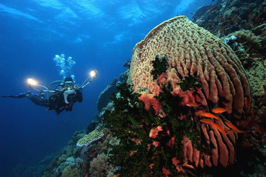 Coron Diving