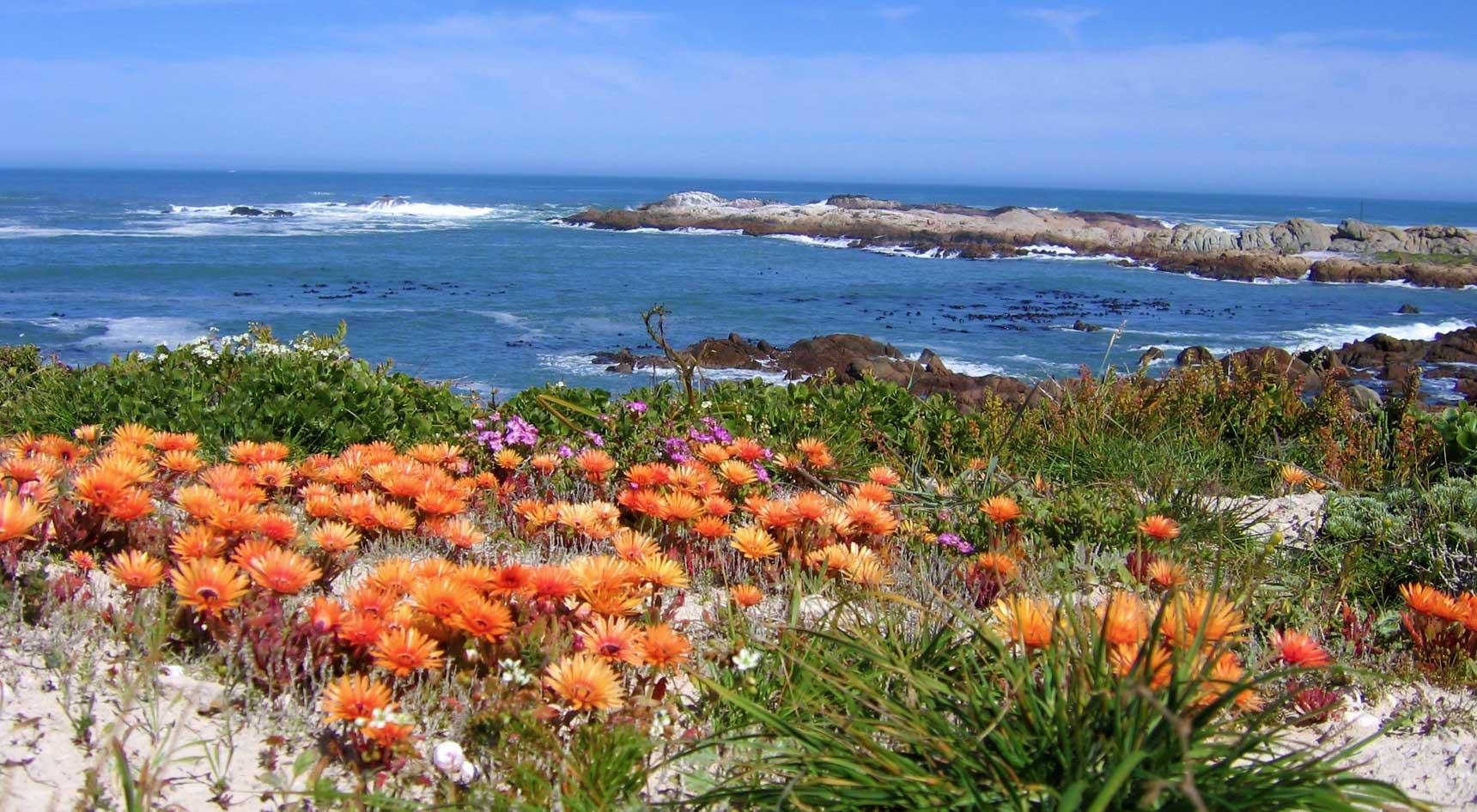 blooming-flowers-west-coast