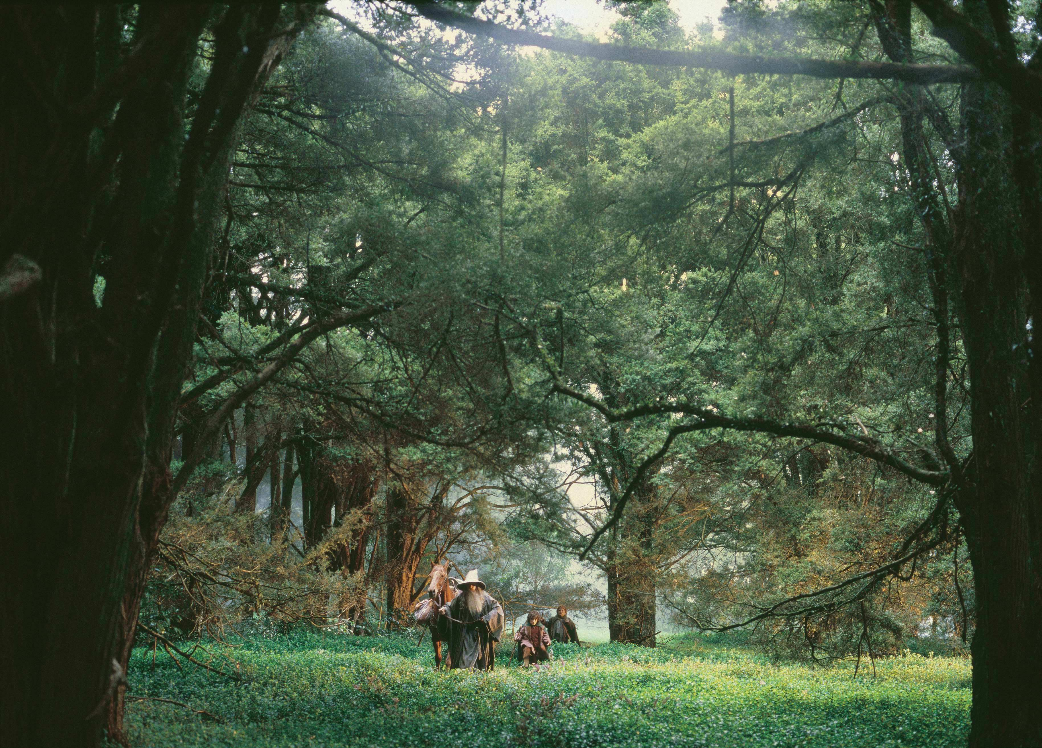 The path to Lothlorien in LOTR