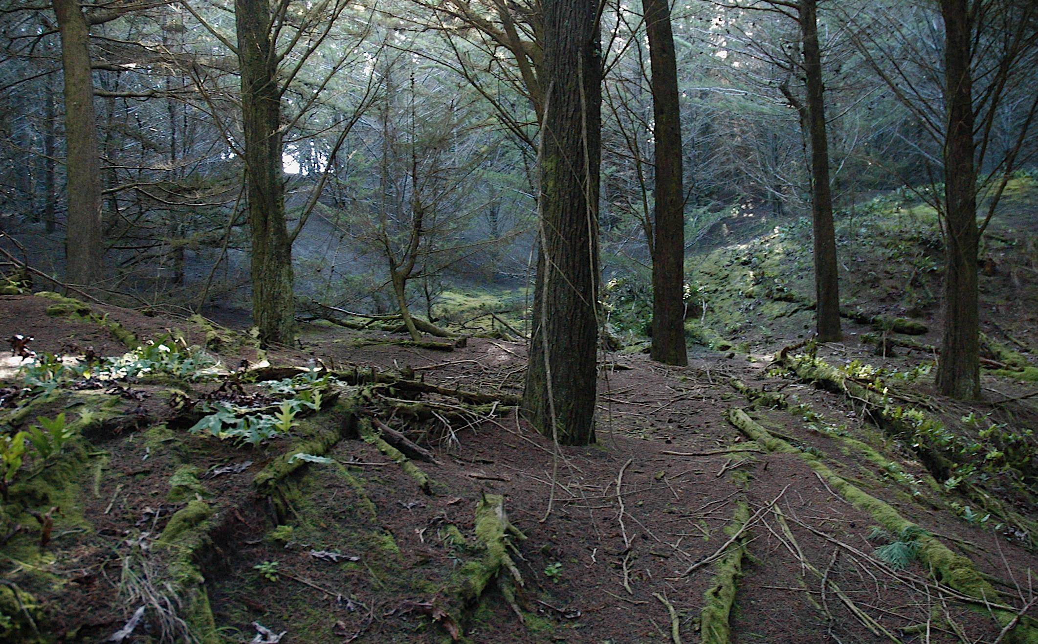 Waitarere forest