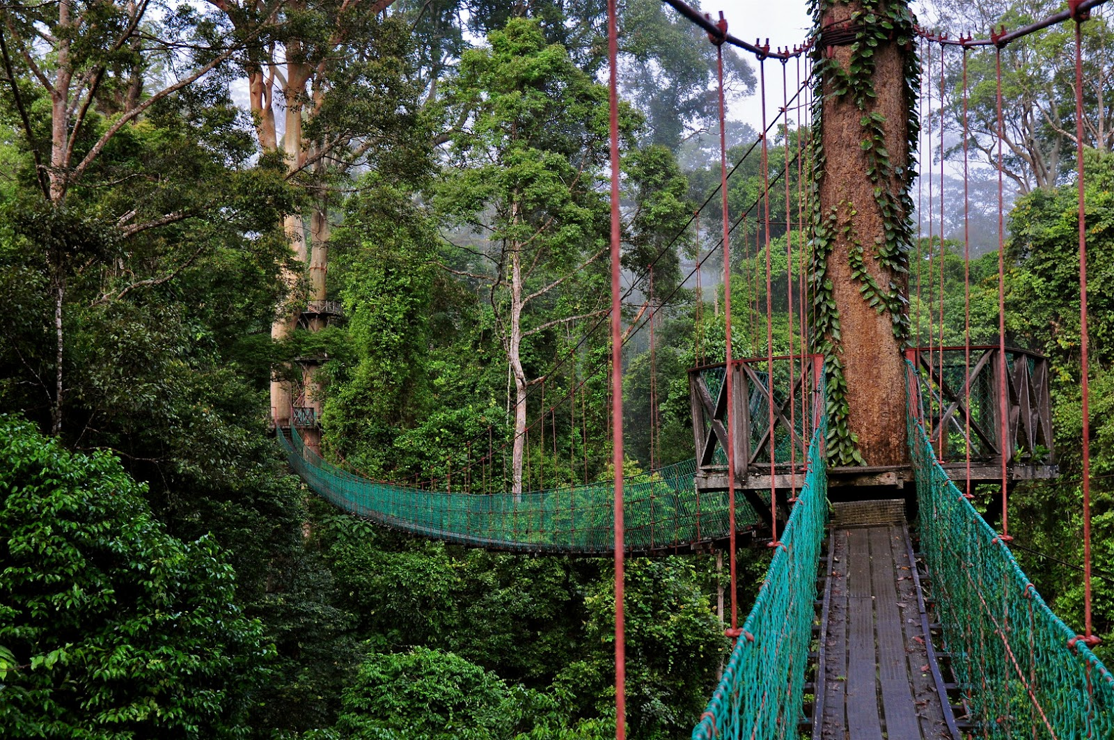Canopy walk along the Darum valley