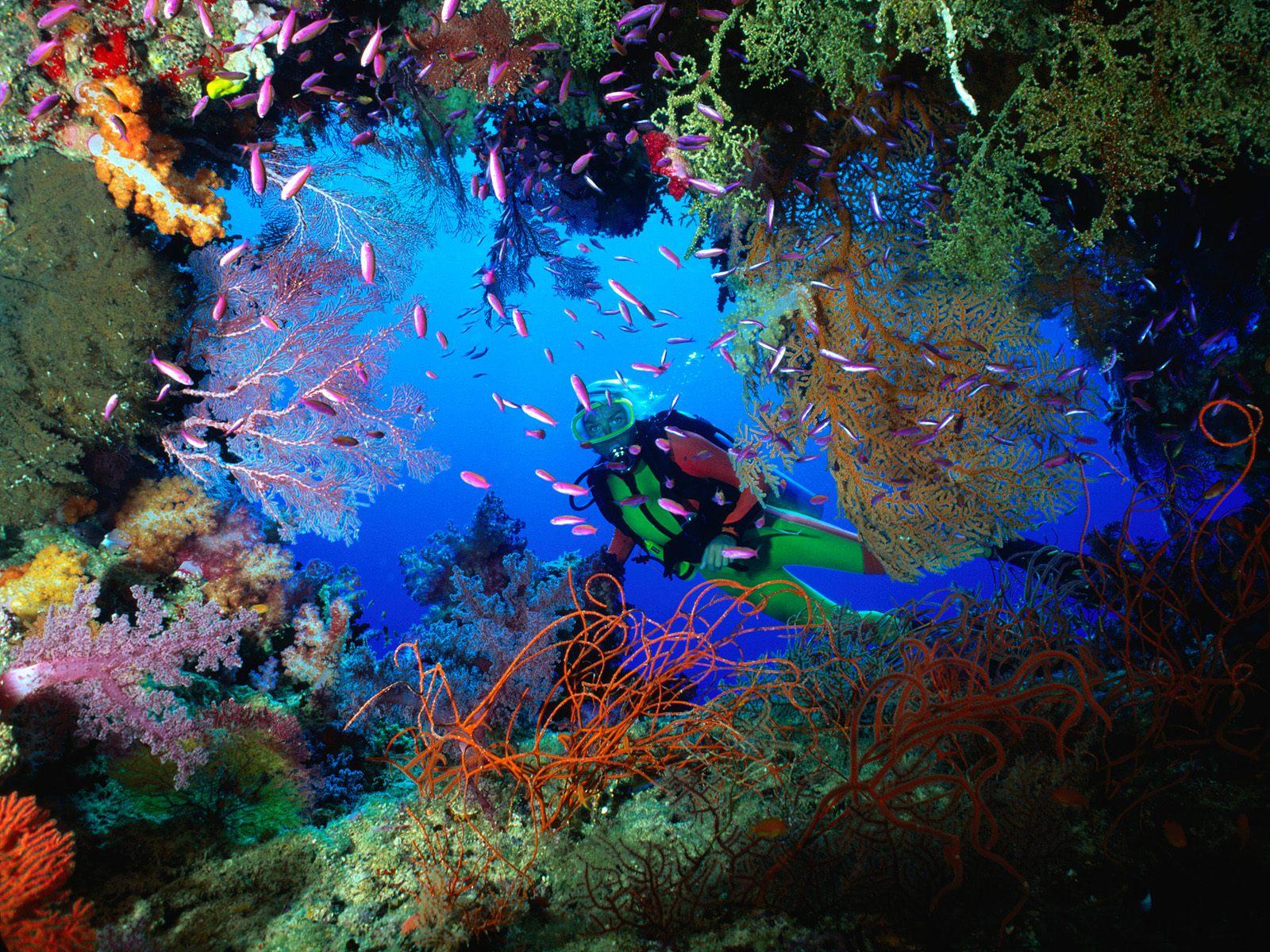 coral-at-the-lang-tengah-island