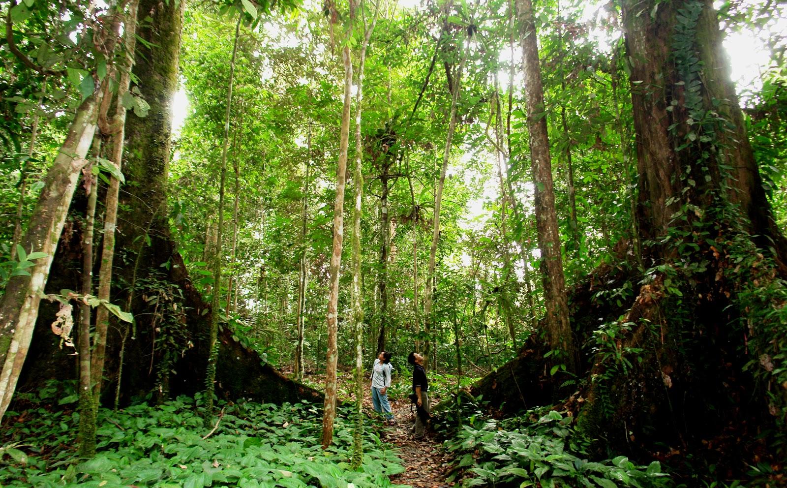 Jungle trekking at Gaya island
