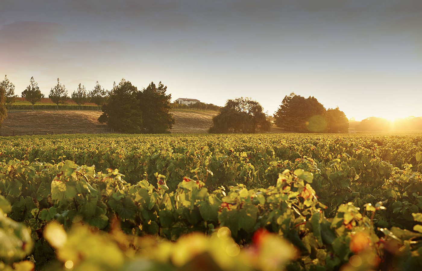 kumeu-village-wineries-in-things-to-do-Auckland