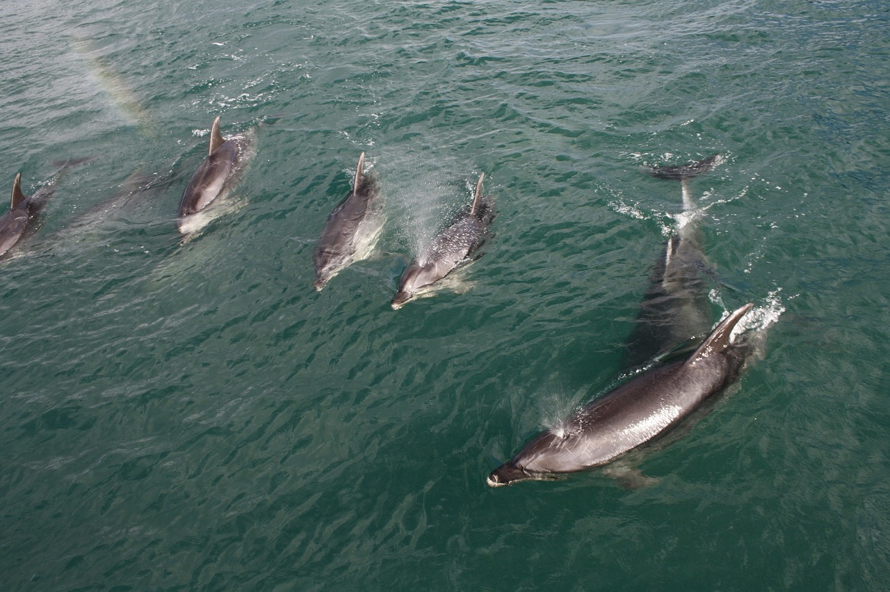 watch marine life in things to do in Auckland