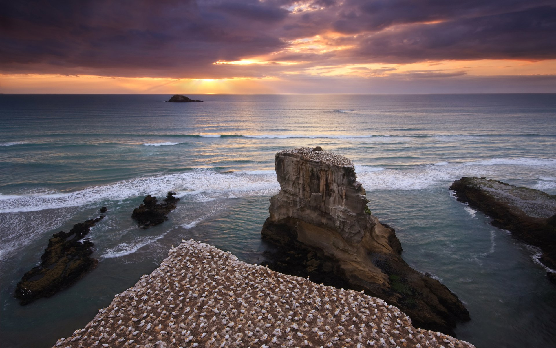 muriwai-island-zealand-north