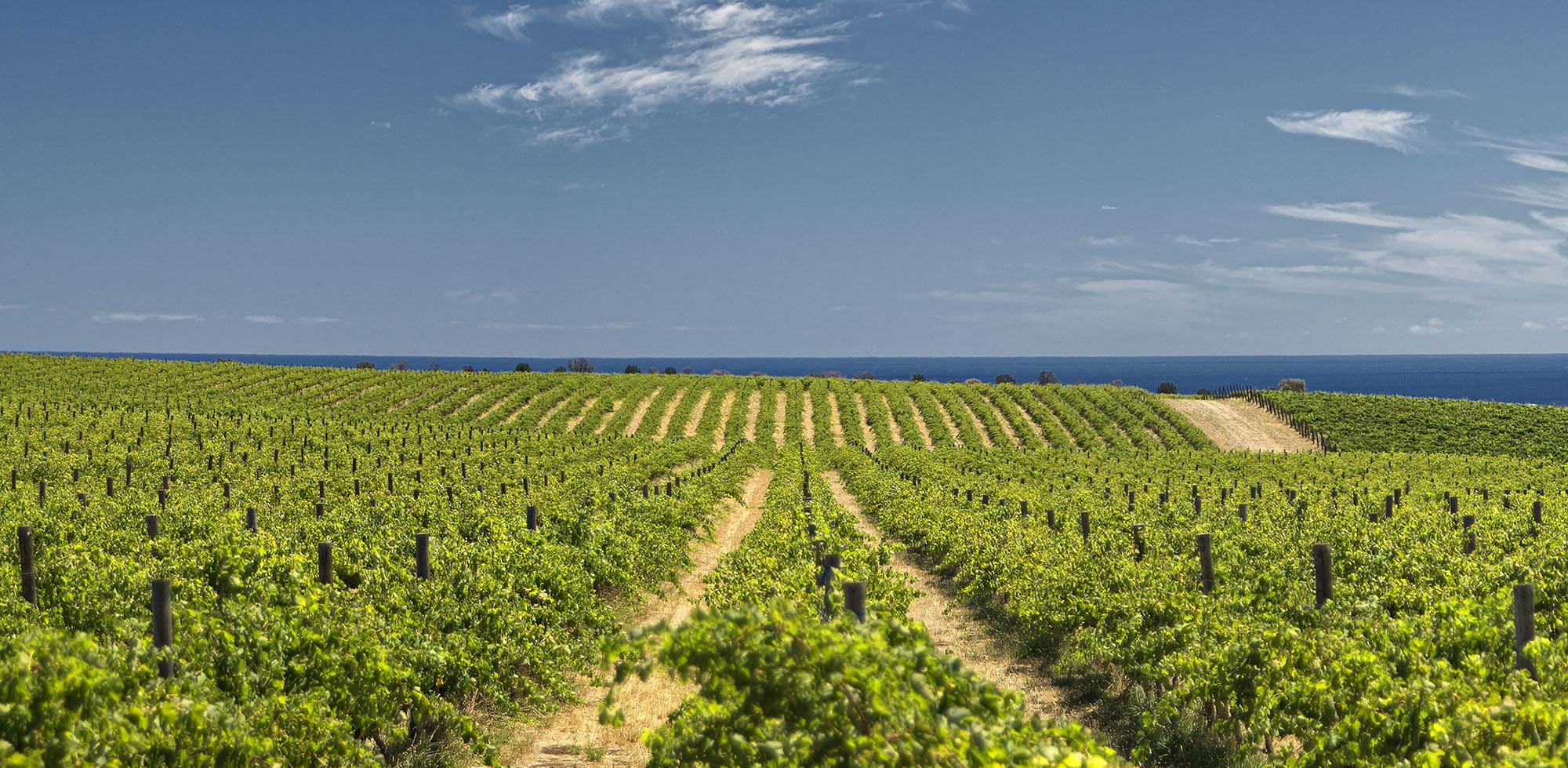 mclaren-vale-in-Australian-wine-trails