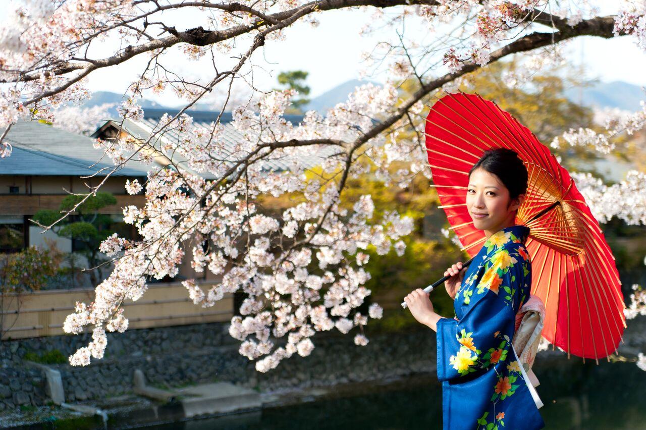 tokyo-cherry-blossoms-festival