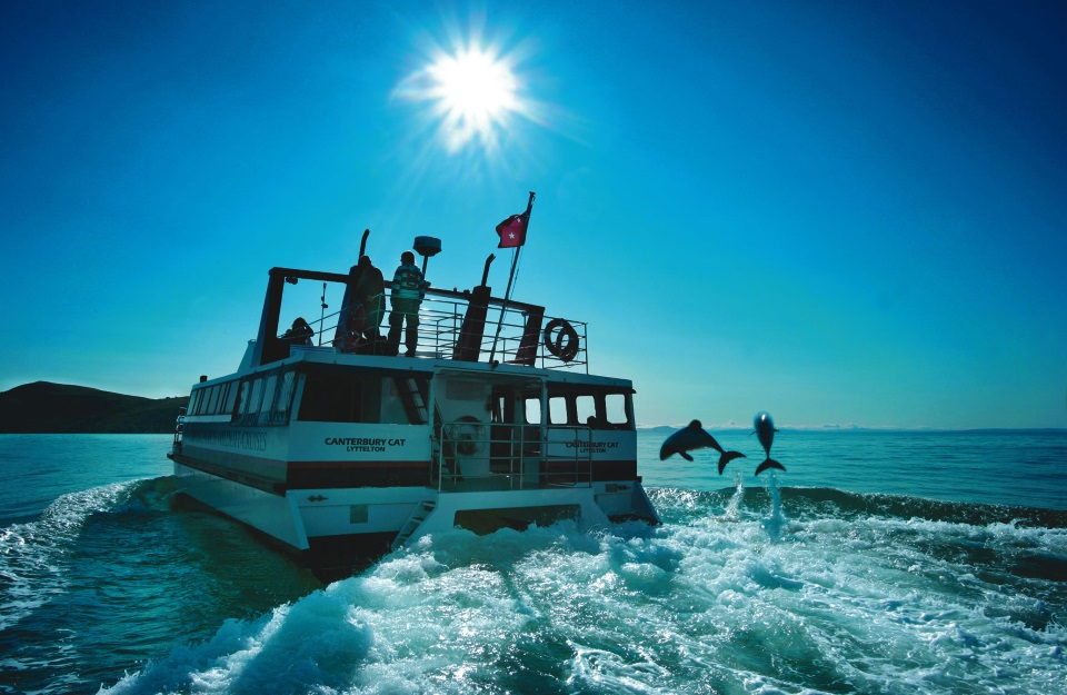 Dolphin cruise in epic New Zealand vacation