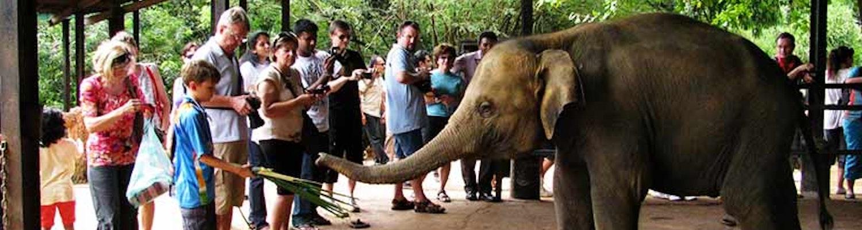 Pinnawala Elephant Sanctuary