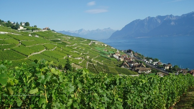 Lavaux Vineyards,things to do in Montreux