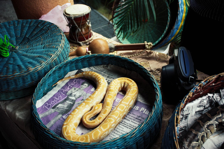 Bangkok snake farm,offbeat things to do in Thailand