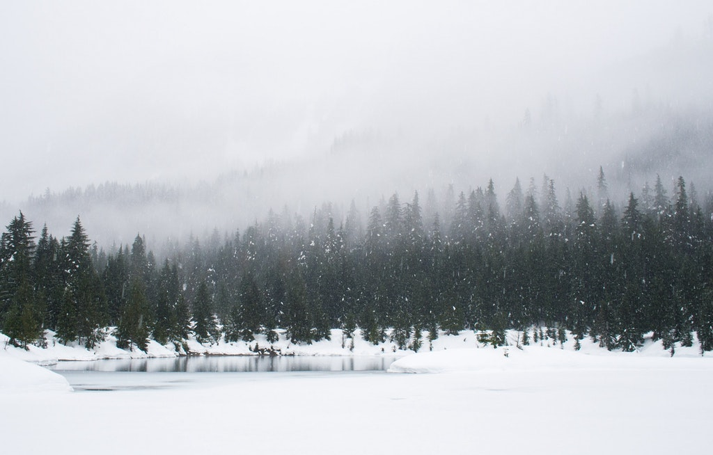 Lulea Winter Forest