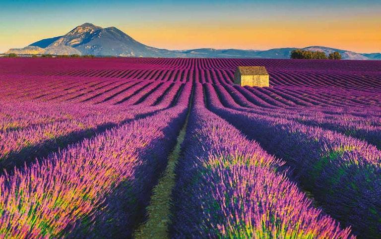 Provence, Europe Trip