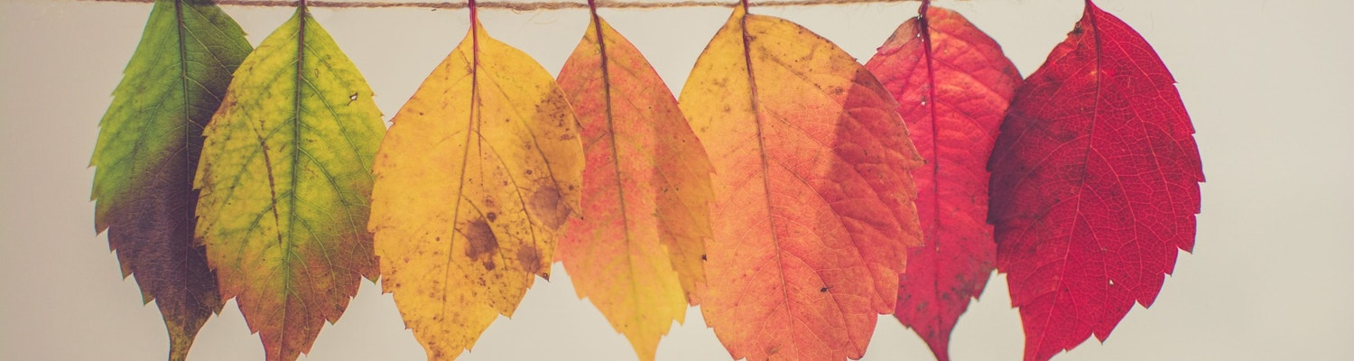 Leaves depicting different seasons