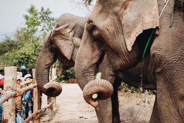 Elephant at Bali Safari and Marine Park