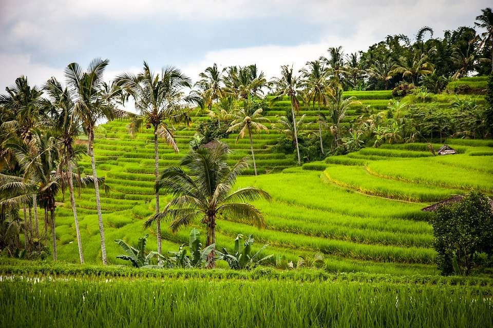 Jatiluwih Rice Terraces, Things to Do in Bali in October