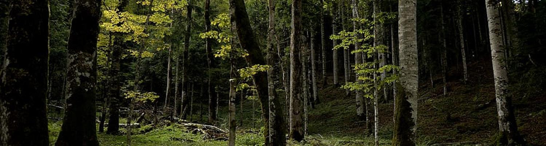 geneva canopy in switzerland