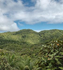 Vallee De Mai National Park in Seychelles