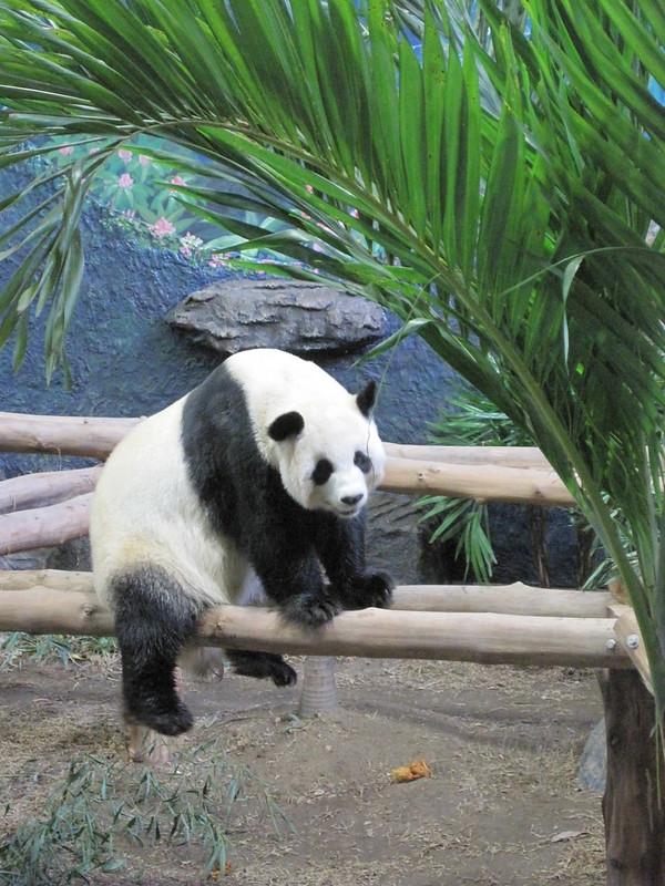 Chiang Mai Zoo In Chiang Mai, Thailand