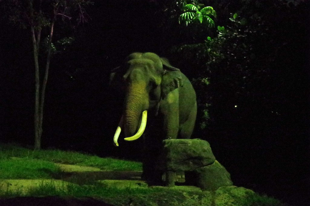 An elephant at the Singapore zoo during the night safari