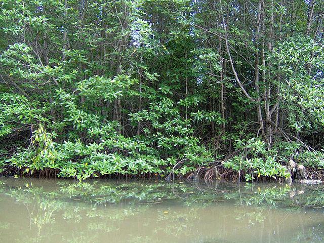 Cần Giờ Biosphere Reserve