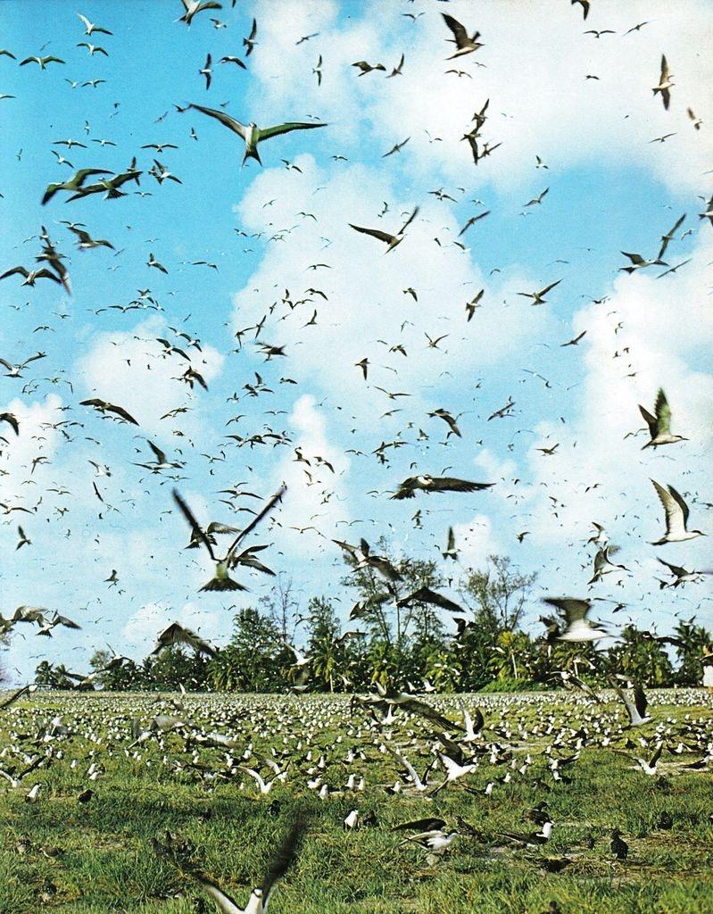 Birds flocking