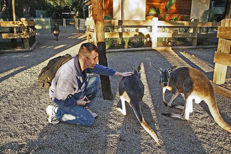 Kangaroo feeding at Featherdale Wildlife Park