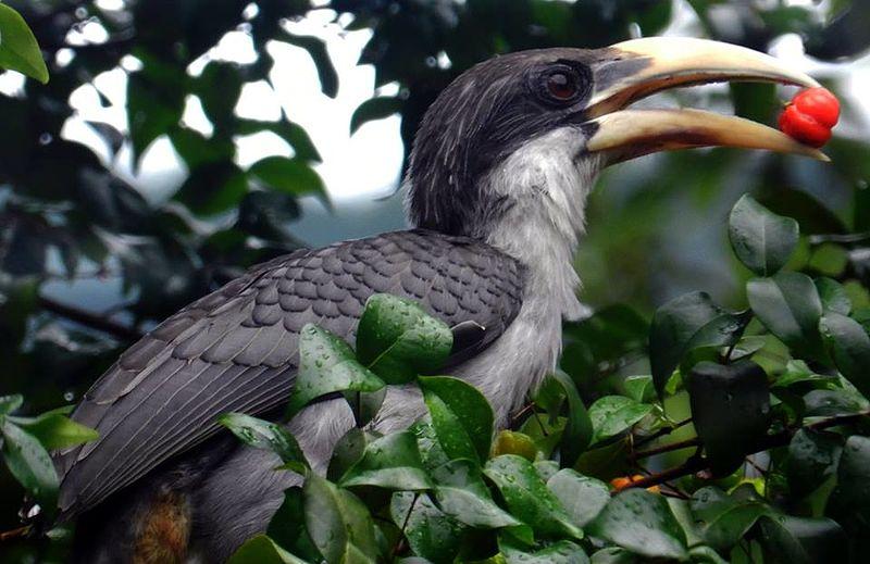 Close up view of Hornbill
