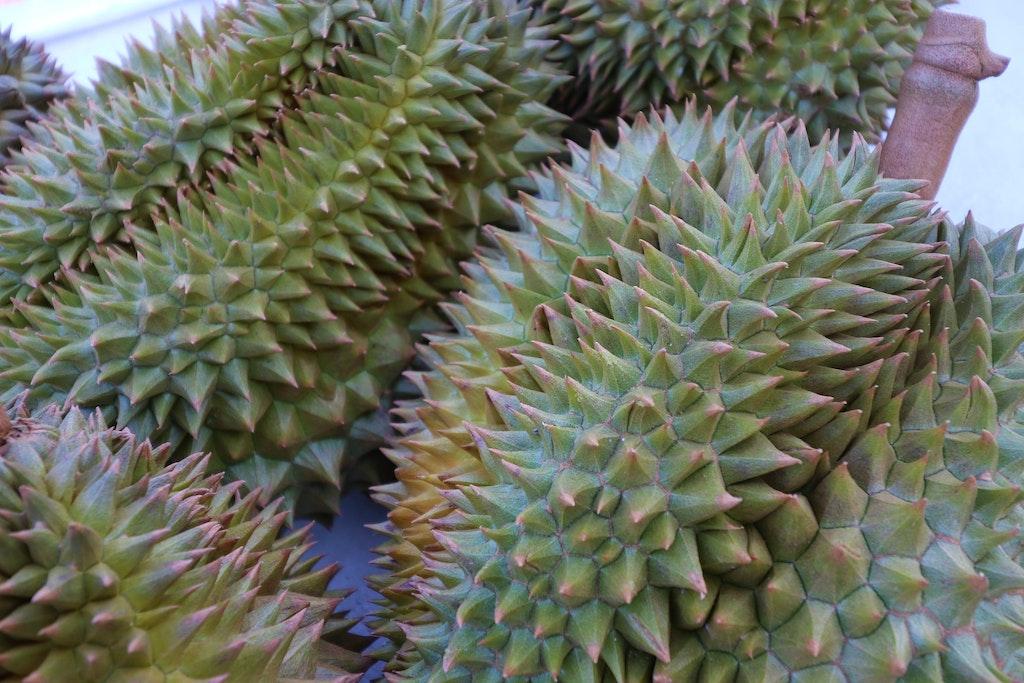 Raw Durian Fruit