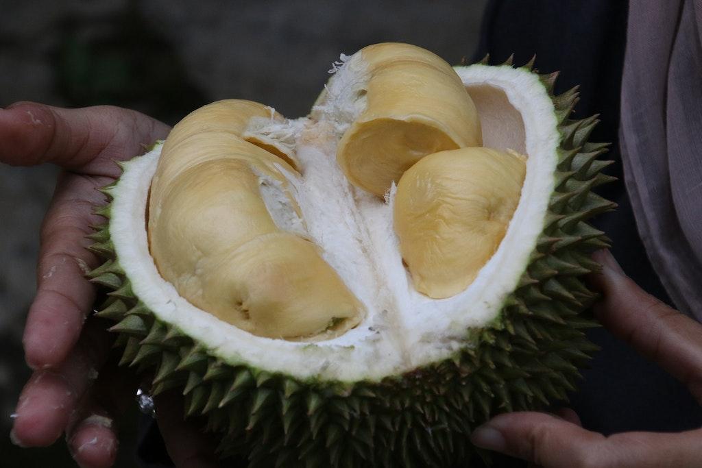 Inner pulp of Durian Fruit