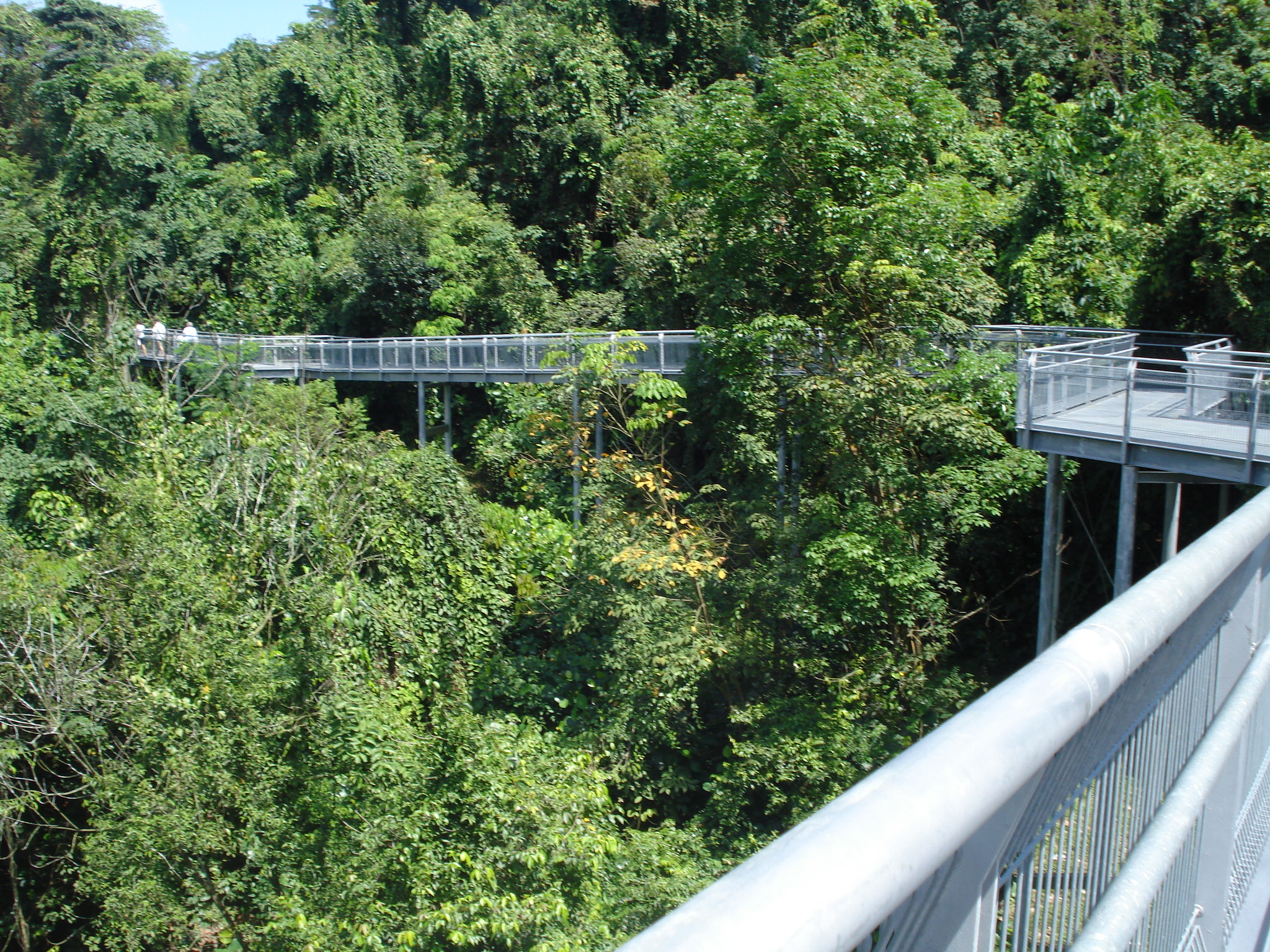 elevated walkway for the forest walk in Southern Ridges