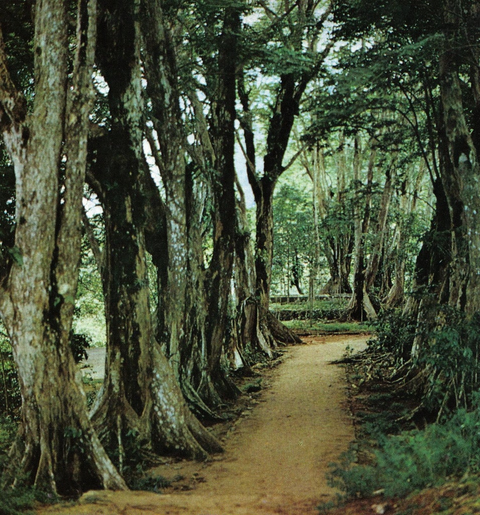 Morne Seychellois Park
