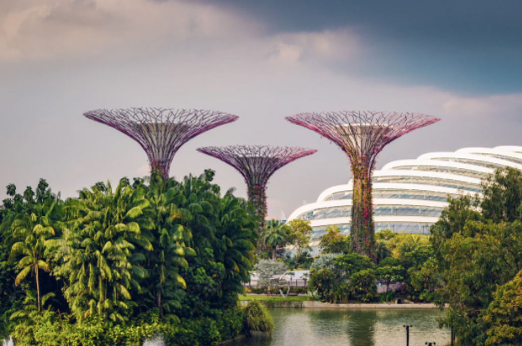 Supertree in Singapore Gardens by the Bay