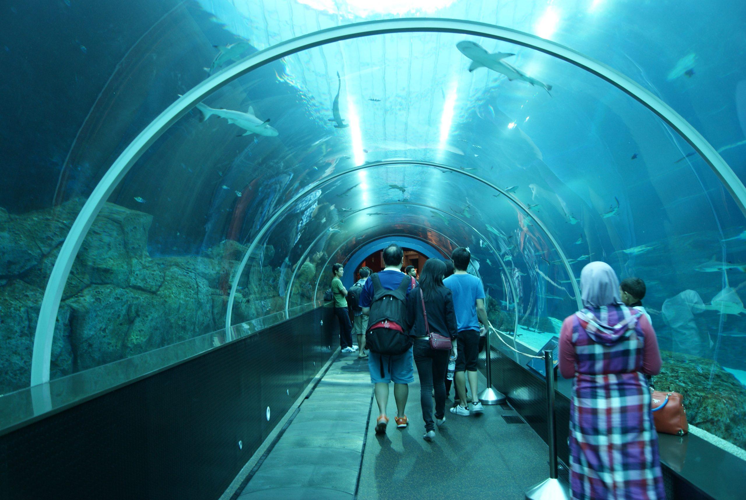 SEA Aquarium Sentosa