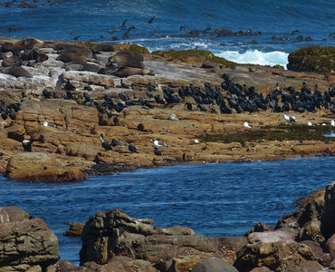 South Africa's beautiful coast