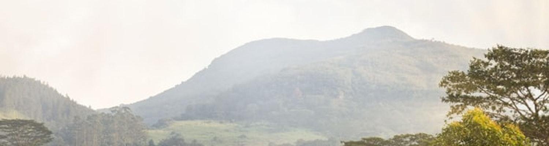 Misty morning in Srilanka
