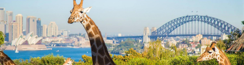 Taronga Zoo with Harbour bridge views