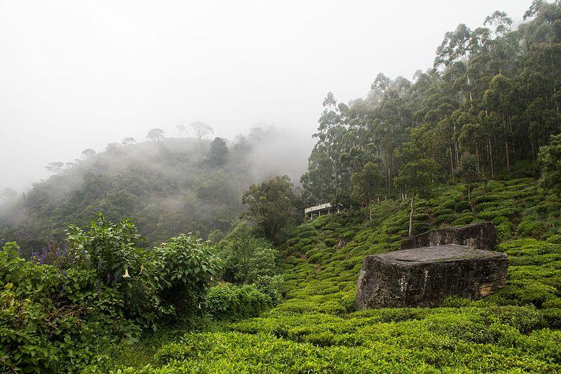 Plantations near Nuwara Eliya (Tea Estates in Nuwara Eliya)