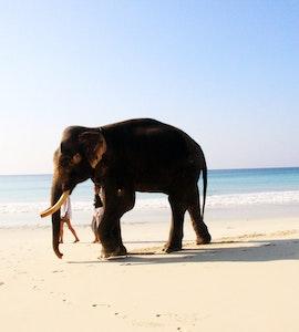 Amazing view of Radhanagar beach, Havelock Island