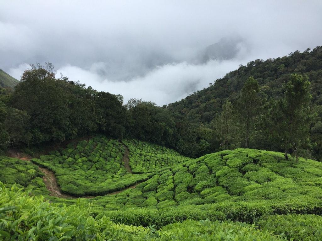 Almari tea garden in assam
