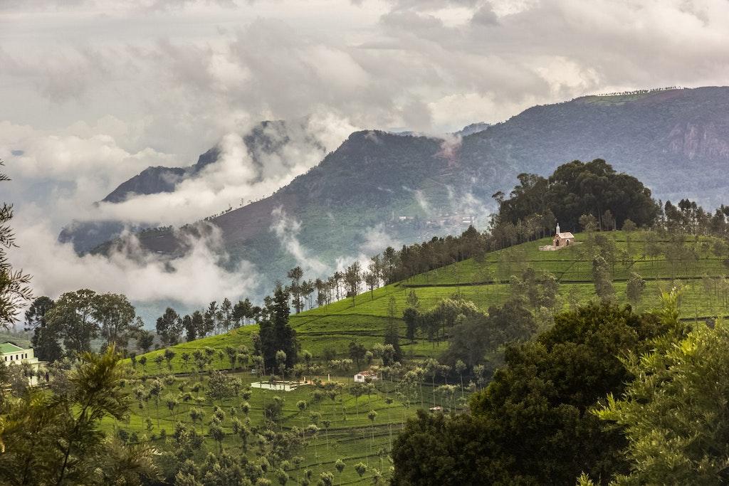 Manohari Tea Estate