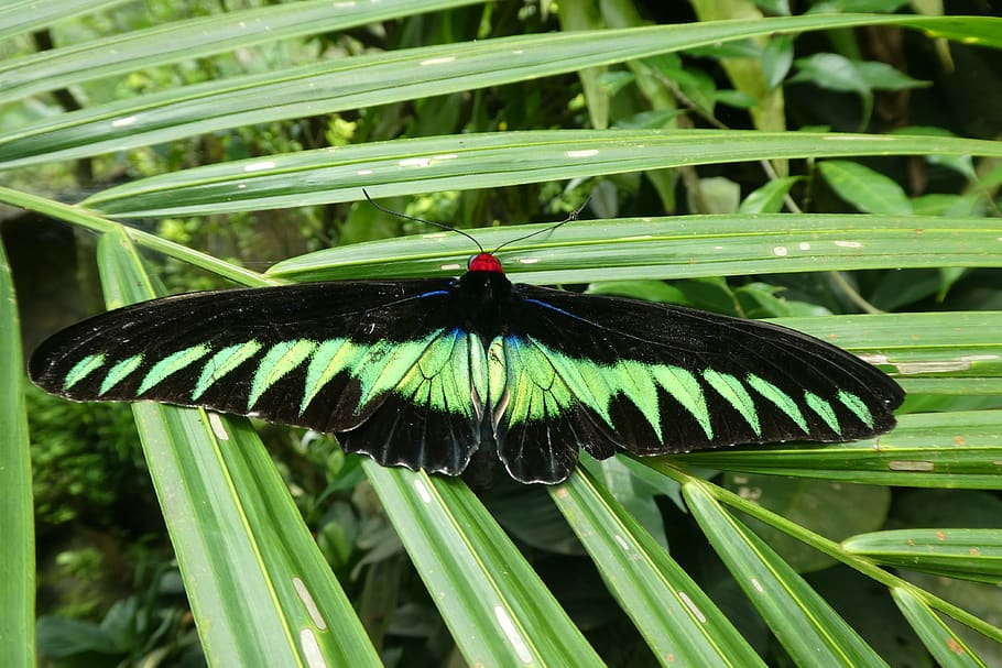 The butterfly at the Butterfly Park
