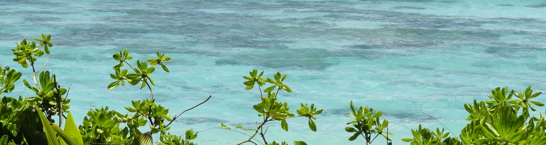 greeneries in the island