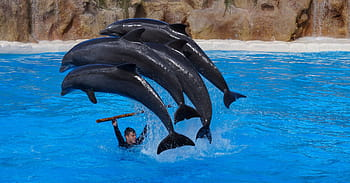Dolphin shows at Dolphin Island