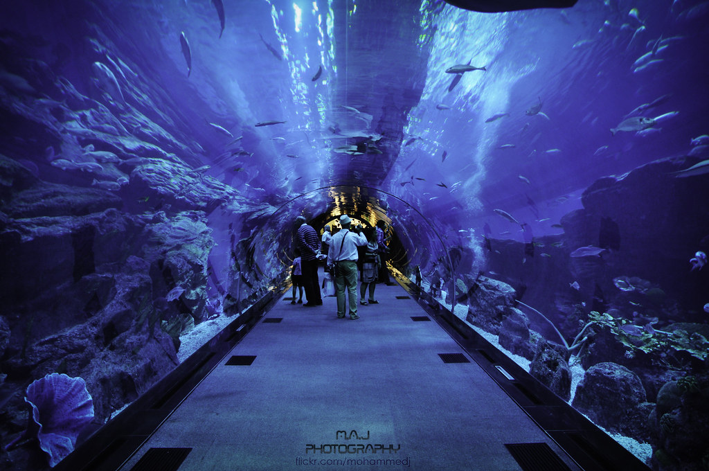 Dubai aquarium tunnel