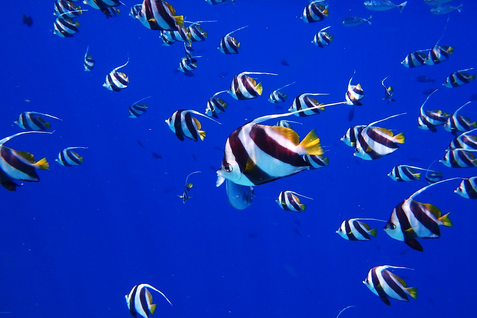 Deep blue seas of Maldives