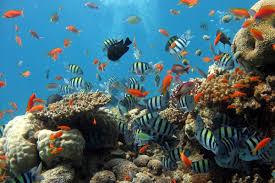sea, underwater, coral reef.