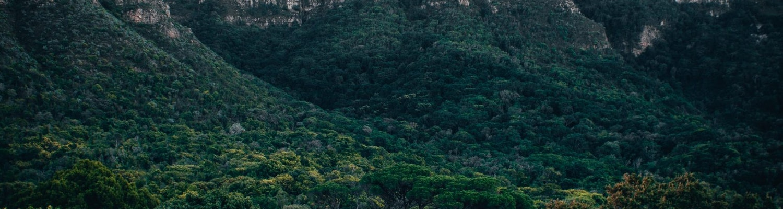 Kirstenbosch Botanical Garden Mountain View