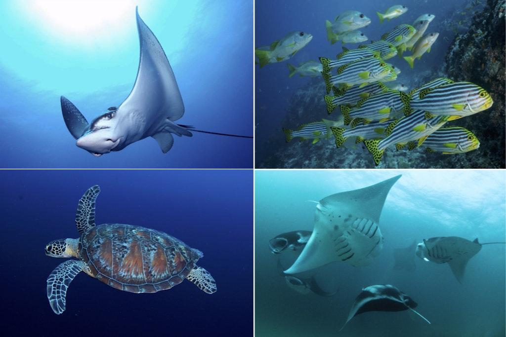 Manta Point Diving